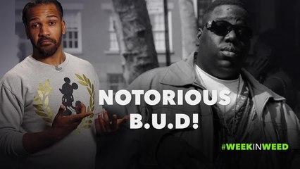 This Week in Weed: Notorious B.U.D!