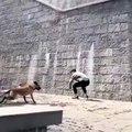 Ce chien a un talent qui coupe le souffle. Admirez ce spectacle unique !