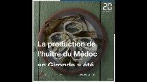 Gironde: Une poignée d'ostréiculteurs relancent l'huître du Médoc