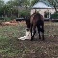 Lorsqu'un cheval et un chien jouent comme des meilleures amis, voici ce que ça donne. Trop chou !