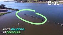 Au Brésil, les dauphins et les hommes collaborent pour pêcher ensemble