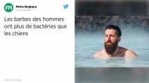 Les barbes des hommes abriteraient plus de bactéries que les poils des chiens