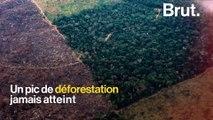 Forêt amazonienne : pire taux de déforestation depuis 10 ans
