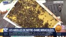 Les abeilles de Notre-Dame ont-elles aussi survécu à l'incendie