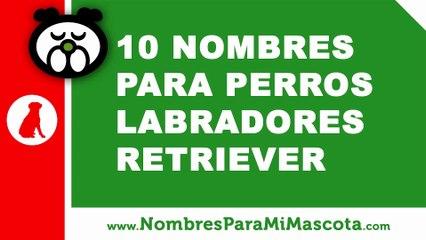 10 nombres para perros labrador retriever - nombres de mascotas - www.nombresparamimascota.com