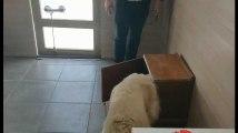 Verlaine: un chalet pour entraîner les chiens d'assistance (2)