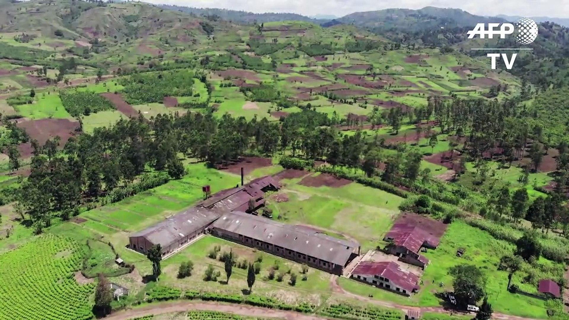 RDC: au Kivu, une usine de thé sur la ligne de front