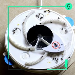 Electronic Housefly Trap - Square