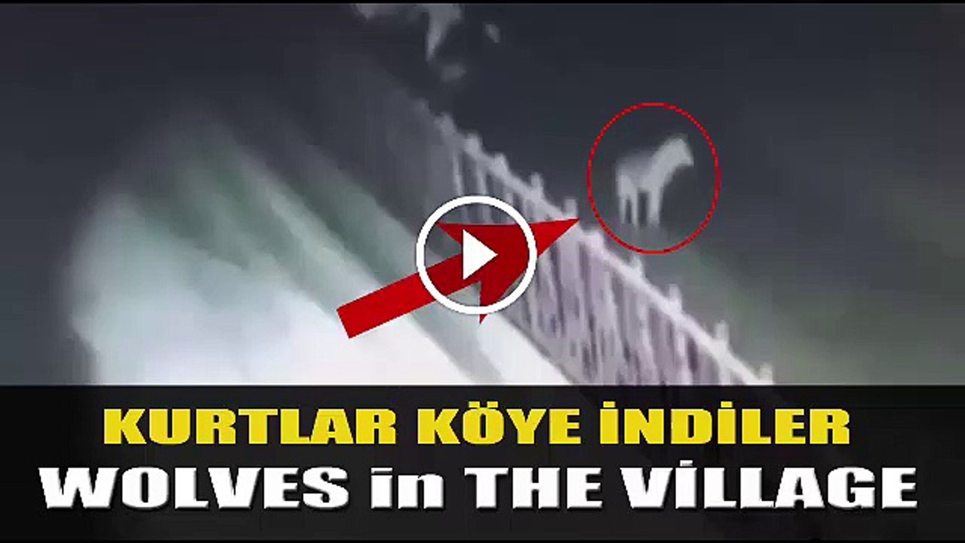 KURTLARIN KOY BASKINI - ViLLAGE RAiD of the WOLVES