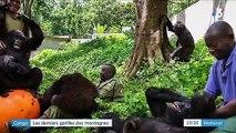 Congo : les derniers gorilles des montagnes