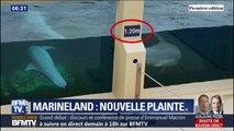 Marineland répond aux accusations de maltraitance envers ses animaux après une nouvelle plainte