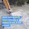 """INFO E1. Une très grave pollution au béton dans la Seine : """"je suis dégoûté"""", dit un garde-pêche"""