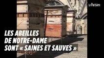 Les abeilles de Notre-Dame sont « saines et sauves »