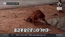 강아지 주연 '유주얼 서스펙트'