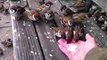 Il nourrit des dizaines d'oiseaux pas très timides... Adorable
