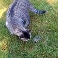 Chat qui joue avec une souris - Chat marrant