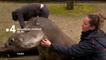 Une saison au zoo - Saison 10 - Bande annonce