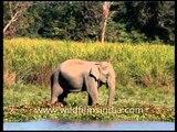 Elephants ahoy! It is an elephant parade...