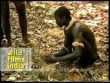 Jarawas plant saplings - Andaman & Nicobar Islands