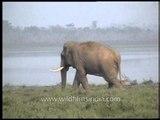 Elephant of Kaziranga National Park
