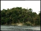 Isolated Jarawa tribal hut sighted from a boat - Andaman & Nicobar Islands