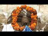 Building cow dung hillocks on Govardhan puja