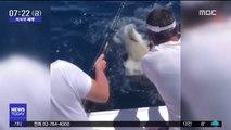 [이 시각 세계] 상어에 총 쏜 美 소방관 '덜미'