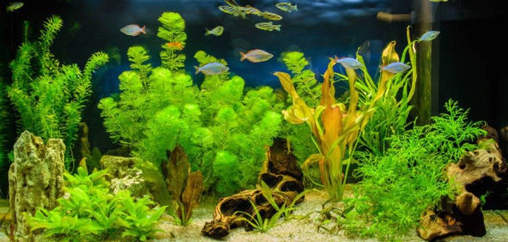 Die besten Aquariumpflanzen