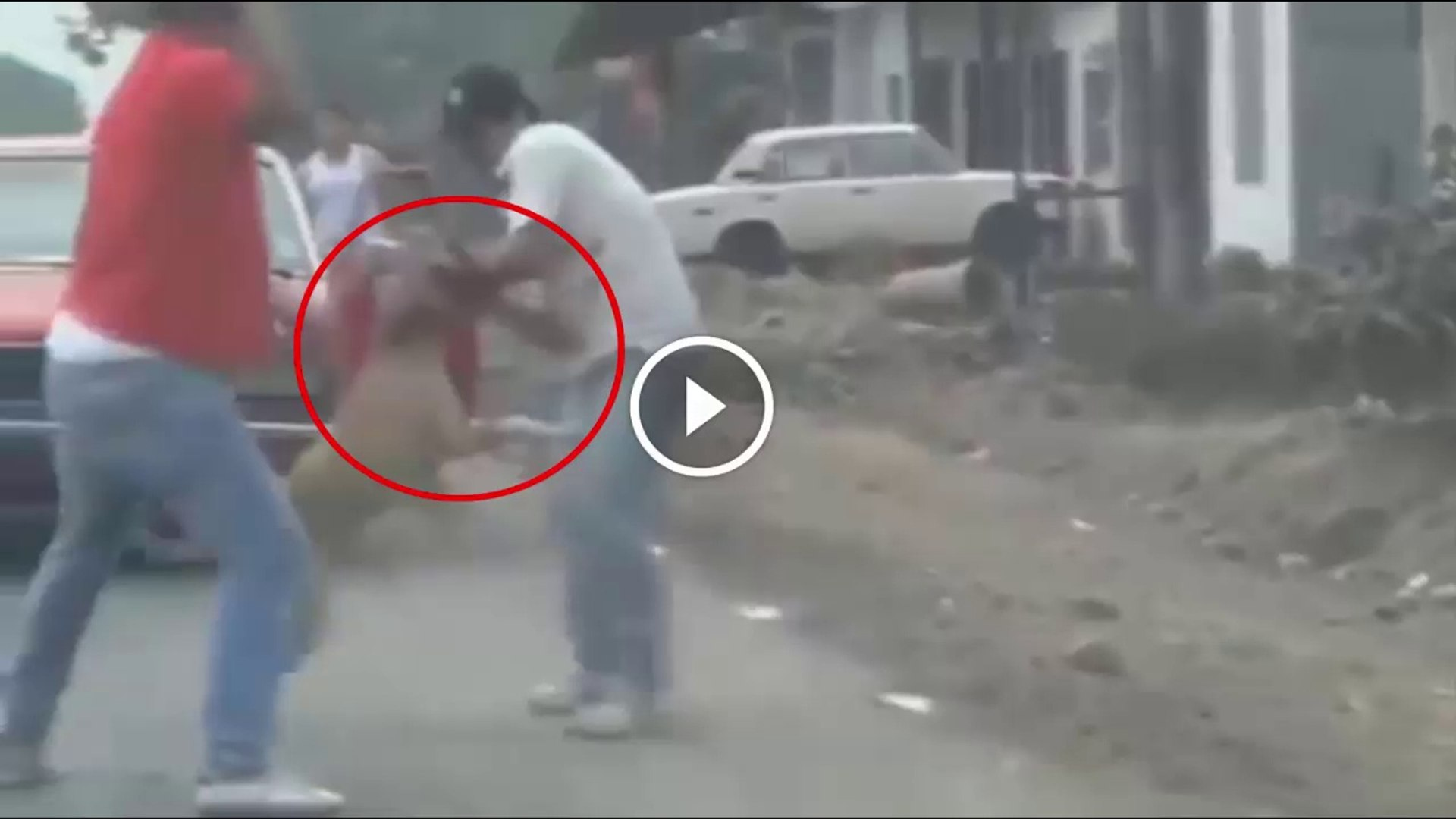 PiTBULL, ROTWEiLLER KOPEKLERiNiN SALDIRI ANLARI - PiTBULL and ROTWiLLER DOGS ATTACKiNG PEOPLE
