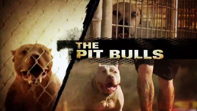 Pit Bulls And Parolees S03E08