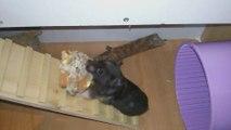 Hámster /  / MASCOTAS / Que bien cuida a sus crías Mamá hámster, le lleva una gran galleta