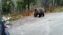 Quand tu croises un ours affamé en pleine forêt