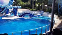 Orcas and dolphins at SeaWorld Orlando