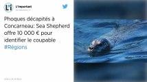 Phoques décapités à Concarneau : Sea Shepherd offre 10 000 euros pour identifier le coupable