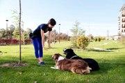 Comment comprendre son chien et mieux communiquer avec lui ?