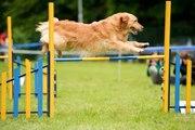 Comment débuter l'agility avec son chien ?