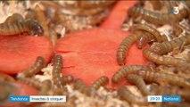 Gastronomie : à la découverte des insectes à croquer
