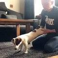 Ce chien fait du yoga avec son maître. Trop cute !