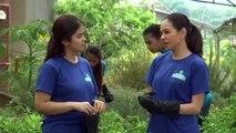 Cho Đến Ngày Gặp Lại Tập 28 - Phim Philippin Raw Lồng Tiếng - Phim Cho Den Ngay Gap Lai Tap 29 - Phim Cho Den Ngay Gap Lai Tap 28