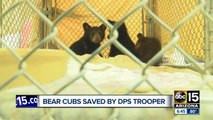 Bear cubs rescued after mother hit and killed on highway