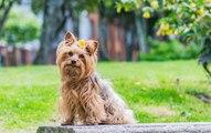 Tout savoir sur la stérilisation canine