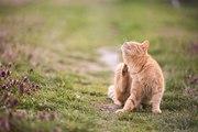 9 faits sur le langage du chat