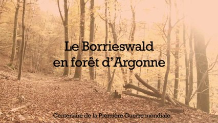 Le camp du Borrieswalde, en forêt d'Argonne