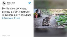 Brigitte Bardot veut lancer une campagne nationale de stérilisation des chats