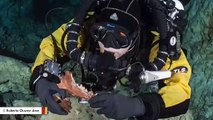 Ice Age Bear And Other Animal Remains Found In Mexico's Underwater Cave
