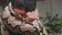 Voici comment survivre à une attaque de python