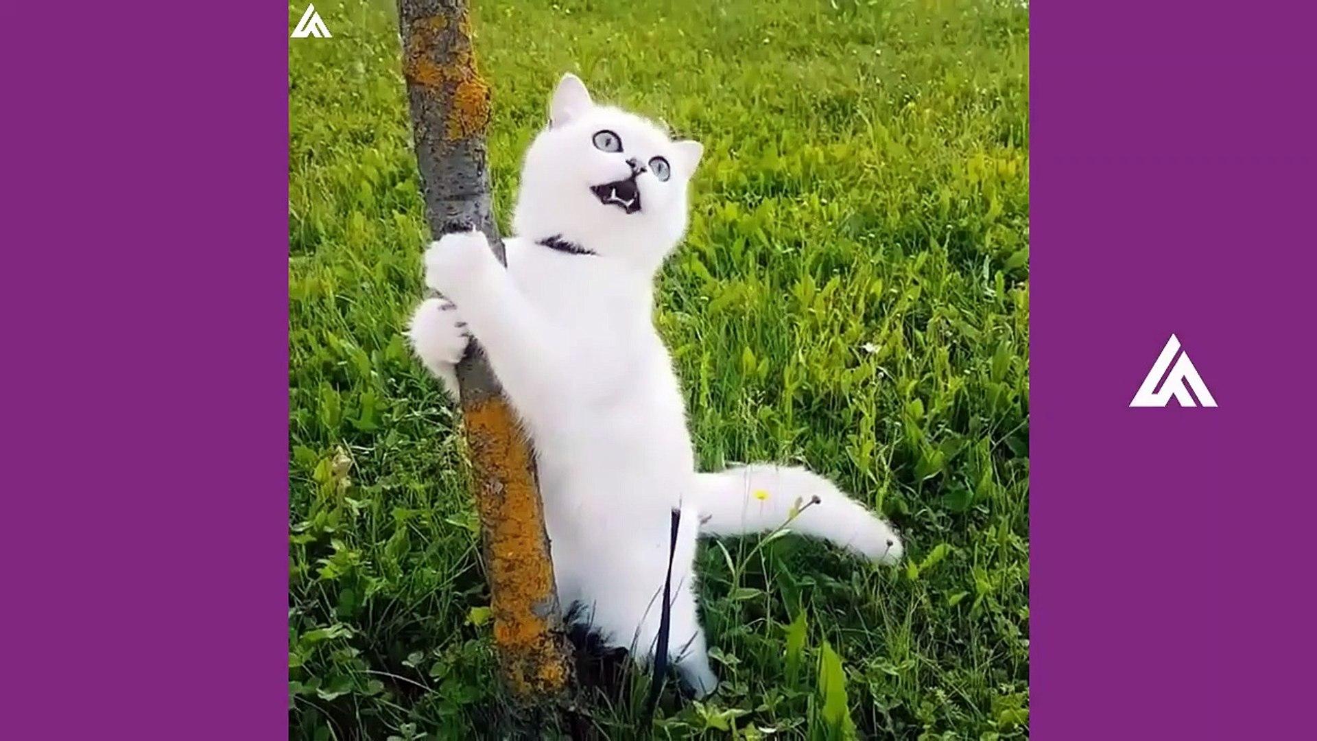 Tik Tok Pets ✪ Funny & Cutest Pets Video Compilation #10