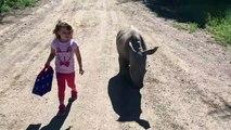 Cette fillette va à l'école avec son bébé rhinocéros... Trop mignon
