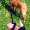 Cette chienne adore faire sa promenade dans le jardin. Regardez !