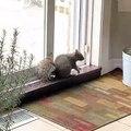 Cet écureuil déguste de l'arachide avec beaucoup d'excitation. Trop drôle !